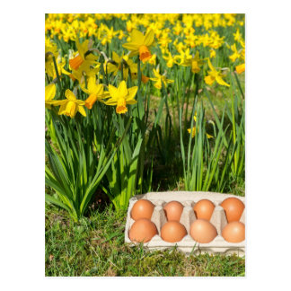Eggs in box on grass with yellow daffodils postcard