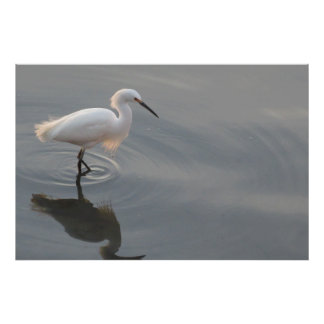 Egret and his reflection poster