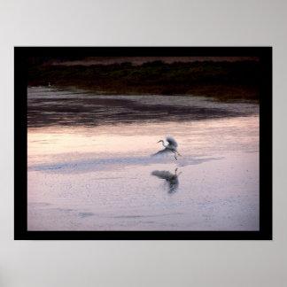 Egret Bird Wildlife Animals Wetlands Photography Poster