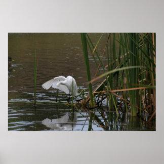 Egret Birds Wildlife Animals Photography Poster