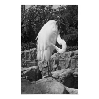Egret Black And White Photo Poster