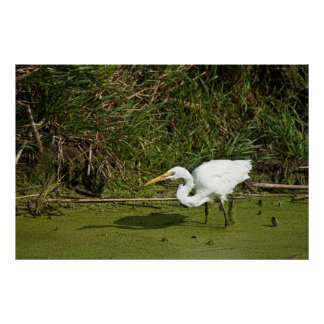 Egret Fishing Posters