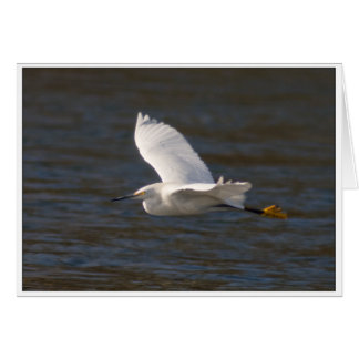 Egret in Flight Card