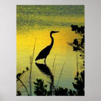 Egret in Florida Poster