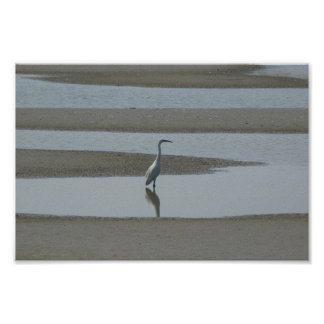 Egret In The Water Poster