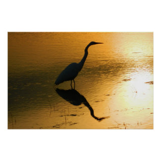 Egret Reflection at Sunset Poster