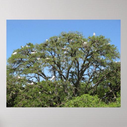 Egrets in a tree print