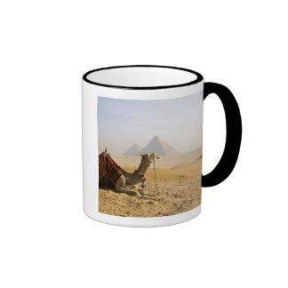 Egypt, Cairo. A lone camel gazes across the Ringer Mug