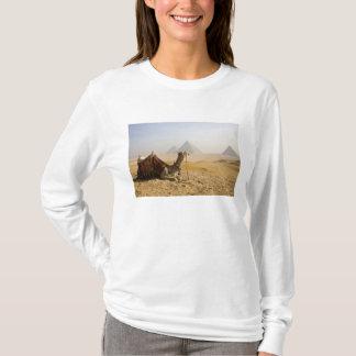Egypt, Cairo. A lone camel gazes across the T-Shirt
