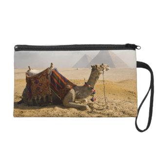 Egypt, Cairo. A lone camel gazes across the Wristlet