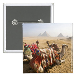Egypt, Cairo. Resting camels gaze across the 15 Cm Square Badge