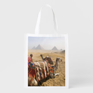 Egypt, Cairo. Resting camels gaze across the 2