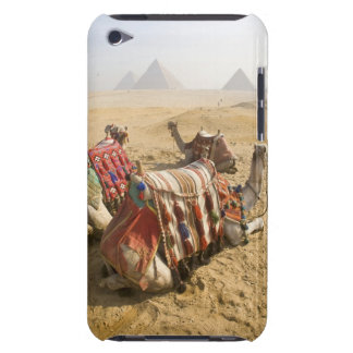 Egypt, Cairo. Resting camels gaze across the 2 Barely There iPod Cover