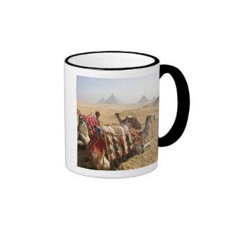 Egypt, Cairo. Resting camels gaze across the Ringer Mug