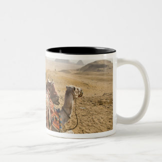 Egypt, Cairo. Resting camels gaze across the Two-Tone Mug