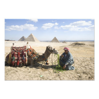Egypt, Giza. Native man feeds his camel in Photo Print