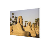 Egypt, Luxor. The Avenue of Sphinxes leads to Canvas Prints
