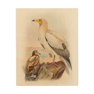 Egyptian Vulture John Gould Birds of Great Britain Wood Canvas