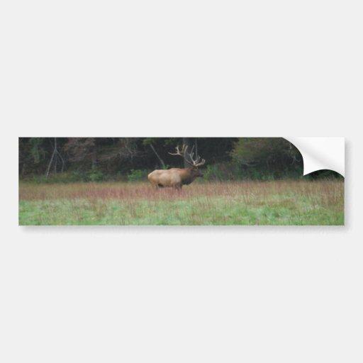 Eight 8 Point Bull Elk in Autumn Bumper Sticker
