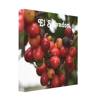 El Salvador Coffee Beans Gallery Wrap Canvas