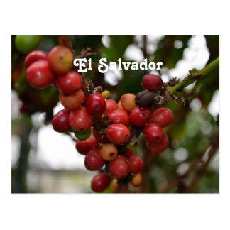 El Salvador Coffee Beans Post Card