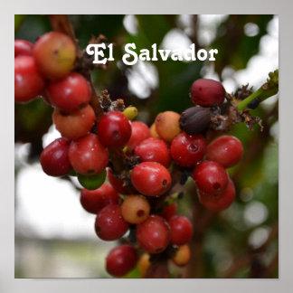 El Salvador Coffee Beans Posters