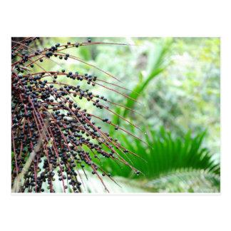 El Yunque Rain Forest Postcard
