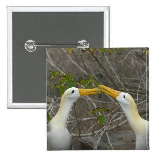 Elaborate courtship dance of Waved Albatros, 15 Cm Square Badge