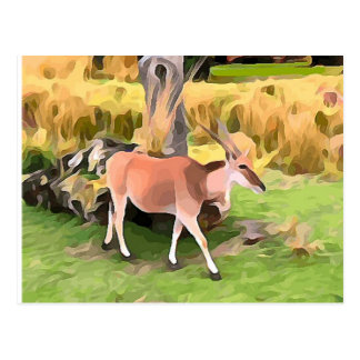 Eland Antelope from Safari Postcard