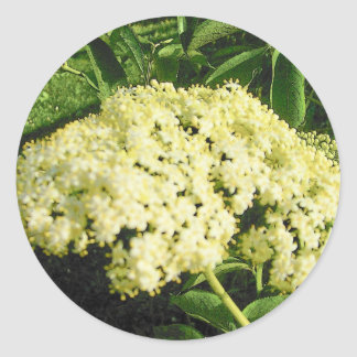 Elderberry Blooms Stickers