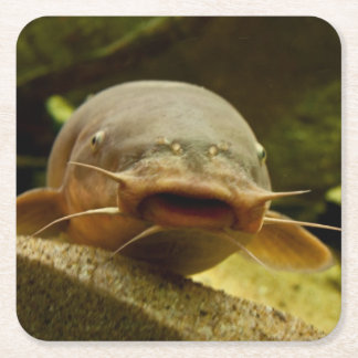Electric catfish square paper coaster