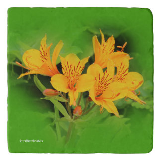 Elegant Lily of the Incas / Yellow Alstroemeria Trivet