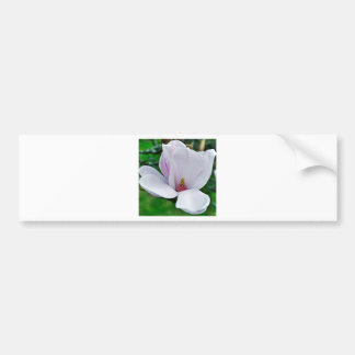 Elegant Magnolie Bumper Sticker