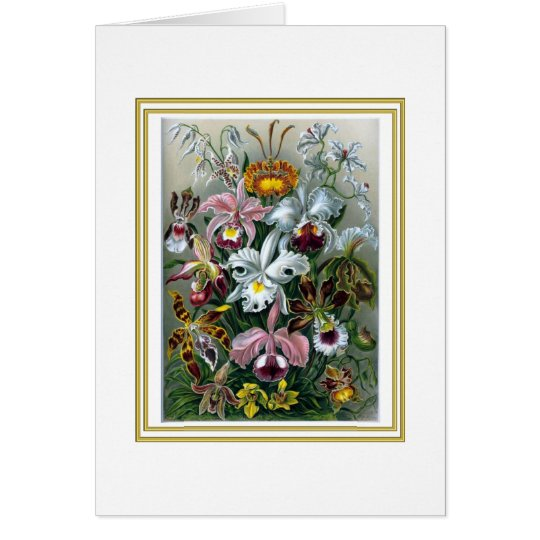 Elegant Orchids by Haeckel Greeting Card