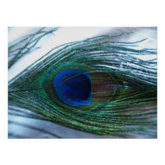 Elegant Peacock Feather Poster