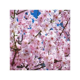 elegant pink cherry blossom tree photograph canvas print