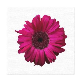 Elegant Pink Gerbera Daisy Wrapped Canvas Canvas Print