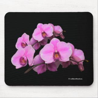 Elegant Pink Orchids Phalaenopsis on Black Mouse Pad