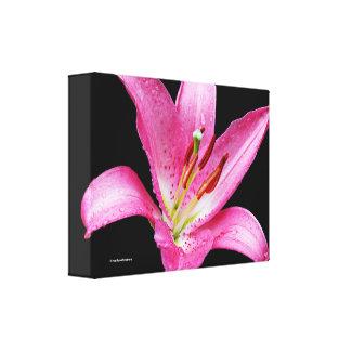 Elegant Pink Oriental Lily Lilium Stargazer Flower Canvas Print
