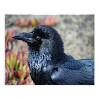 Elegant Raven photo print