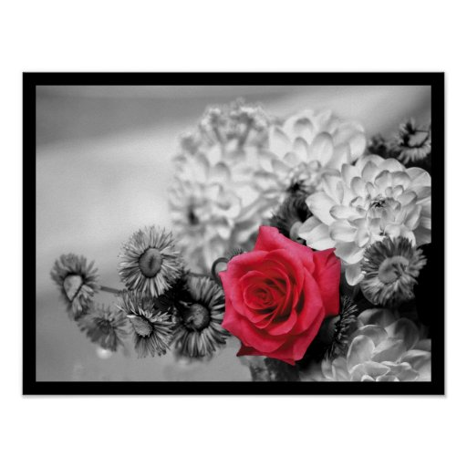 Elegant Red Rose Poster