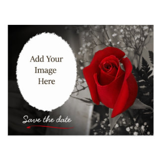 Elegant Red Rose Save the Date Photo Postcard
