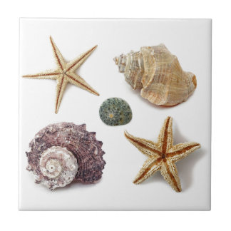 Elegant seashells shabby chic beach ceramic tile