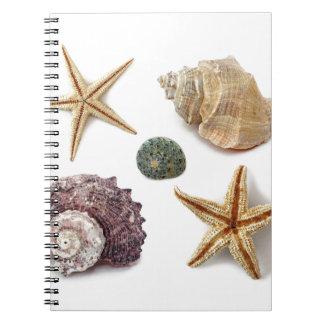 Elegant seashells shabby chic beach journal