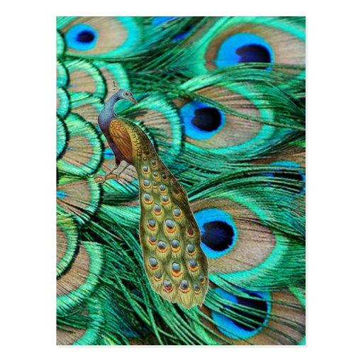 Elegant Vintage Peacock Invitation for Wedding Post Card