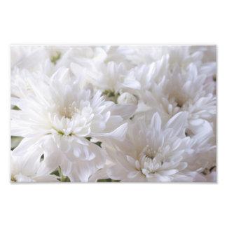 Elegant White flowers Photo Print
