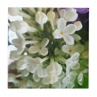 Elegant white lilac blossom photo ceramic tile