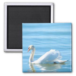Elegant White Swan - Magnet