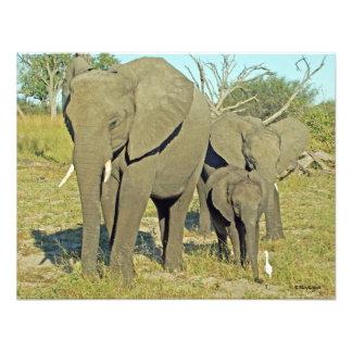 ELEPHANT 22 ART PHOTO
