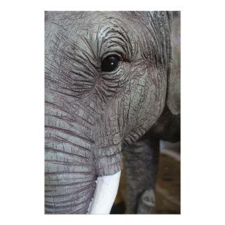 elephant-543256 Grey elephant photography close-up Photo